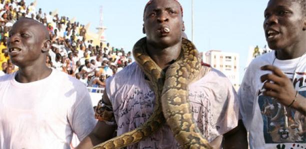 Combat contre Modou Lo : Ama Baldé réclame...
