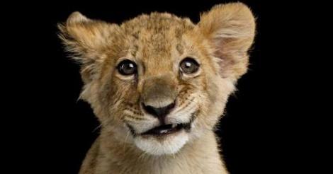 Un lionceau retrouvé dans un appartement en banlieue parisienne