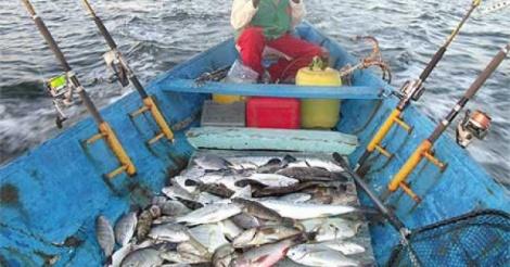 Accès aux moteurs hors-bord subventionnés   Des pêcheurs dénoncent un  blocage 6efdc615b48