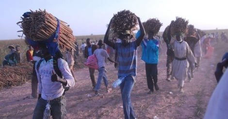 Les mourides entament la récolte des champs de Khelcom le 7 octobre