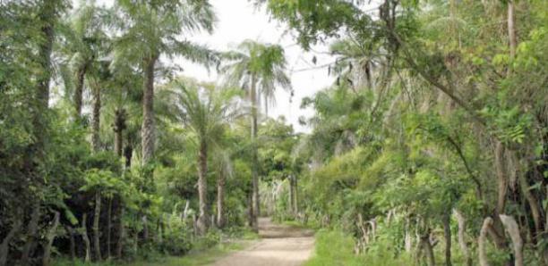 Mbour - Sortie des éleveurs et agriculteurs : La mairie de Sandiara contre-attaque