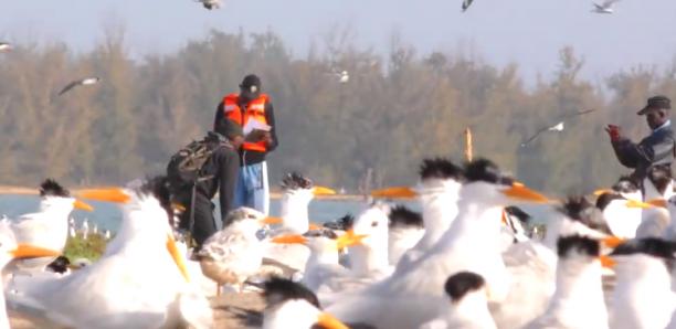 Parc de la Langue Barbarie : Voyage au cœur de l'univers fantastique des oiseaux