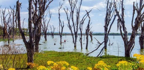Touristes emportés par des crues au Kenya: six corps sur sept ont été retrouvés