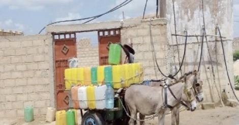 Commerce d'eau de puits à Mbacke : Une source de revenus très liquide