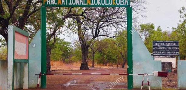 Trafic d'or au parc de Niokolokoba : Pas de liberté provisoire pour les prévenus
