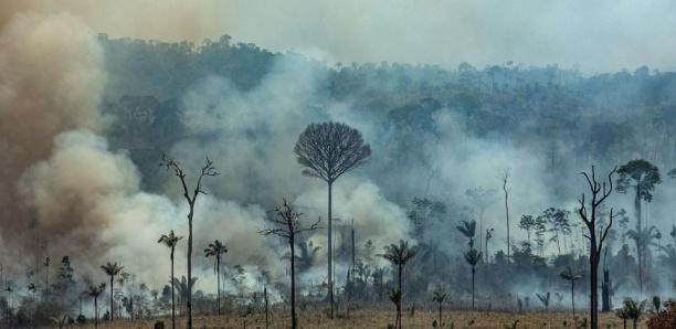 Les entreprises françaises, complices des feux en Amazonie