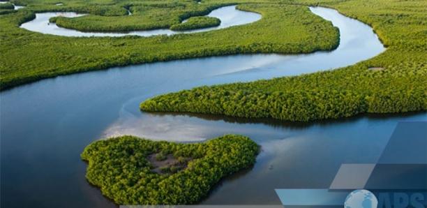 Le Delta du Sine-Saloum risque l'exclusion du club des plus belles baies du monde (président)